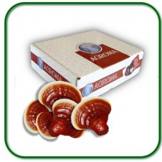 Reishi Naturel 100gr